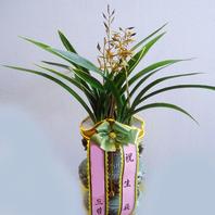 보산 투각분특(겨울철에 꽃이핍니다)