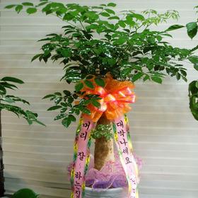 해피트리 공기정화식물