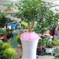 해피트리 공기정화식물A