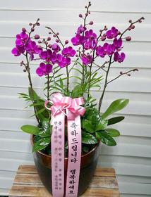 만천홍 상품