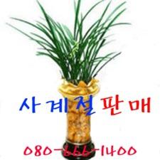 철골소심 동양란