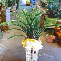 태양관(꽃은 동절기에핍니다)